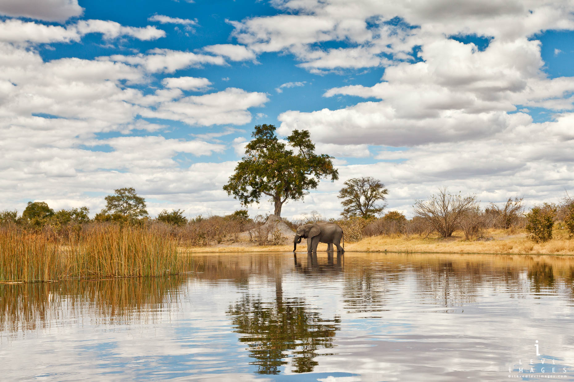 Elephants, clouds and tree reflected in Savuti channel, Botswana