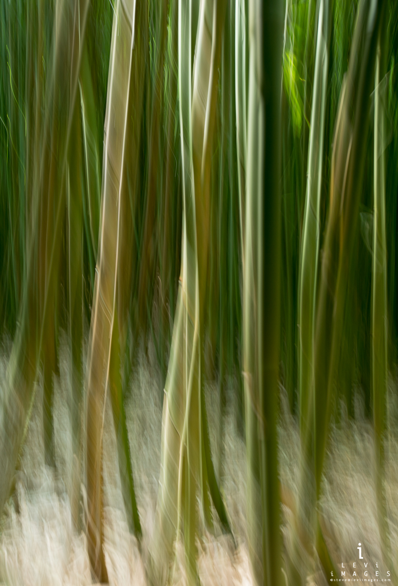 Bamboo abstract. Haleakala National Park, Maui, Hawaii