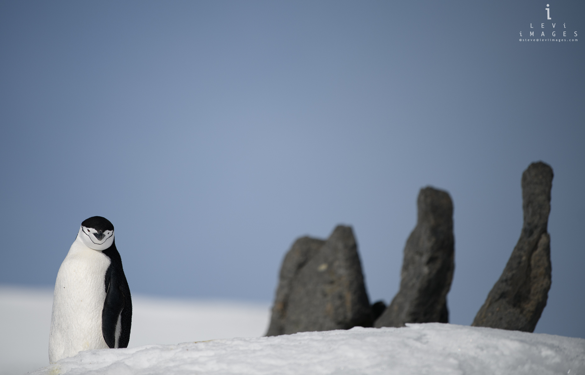 Chinstrap penguin (Pygoscelis antarcticus) on snow with stone structure. Gourdin Island, Antarctica