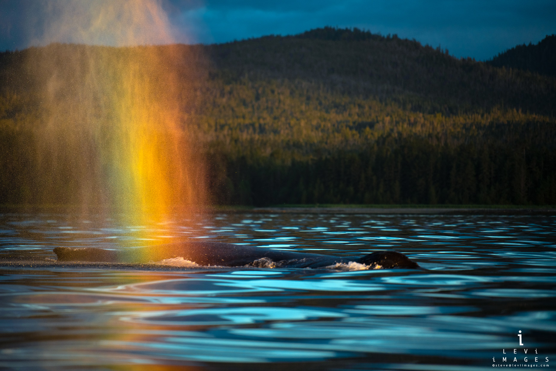 Rainbow Blow - Humpback Whale