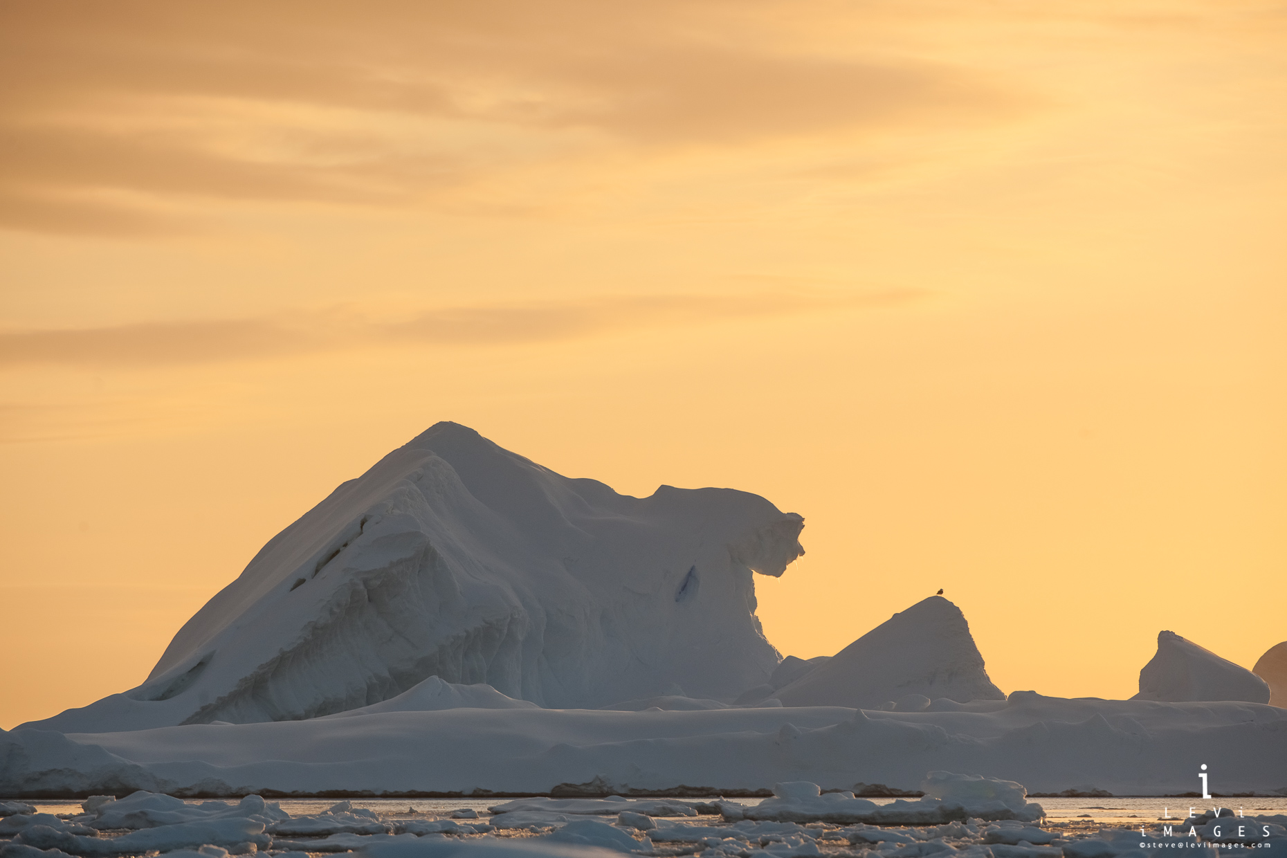 sphinx-like iceberg looks at a bird in golden light. Booth island, Antarctica