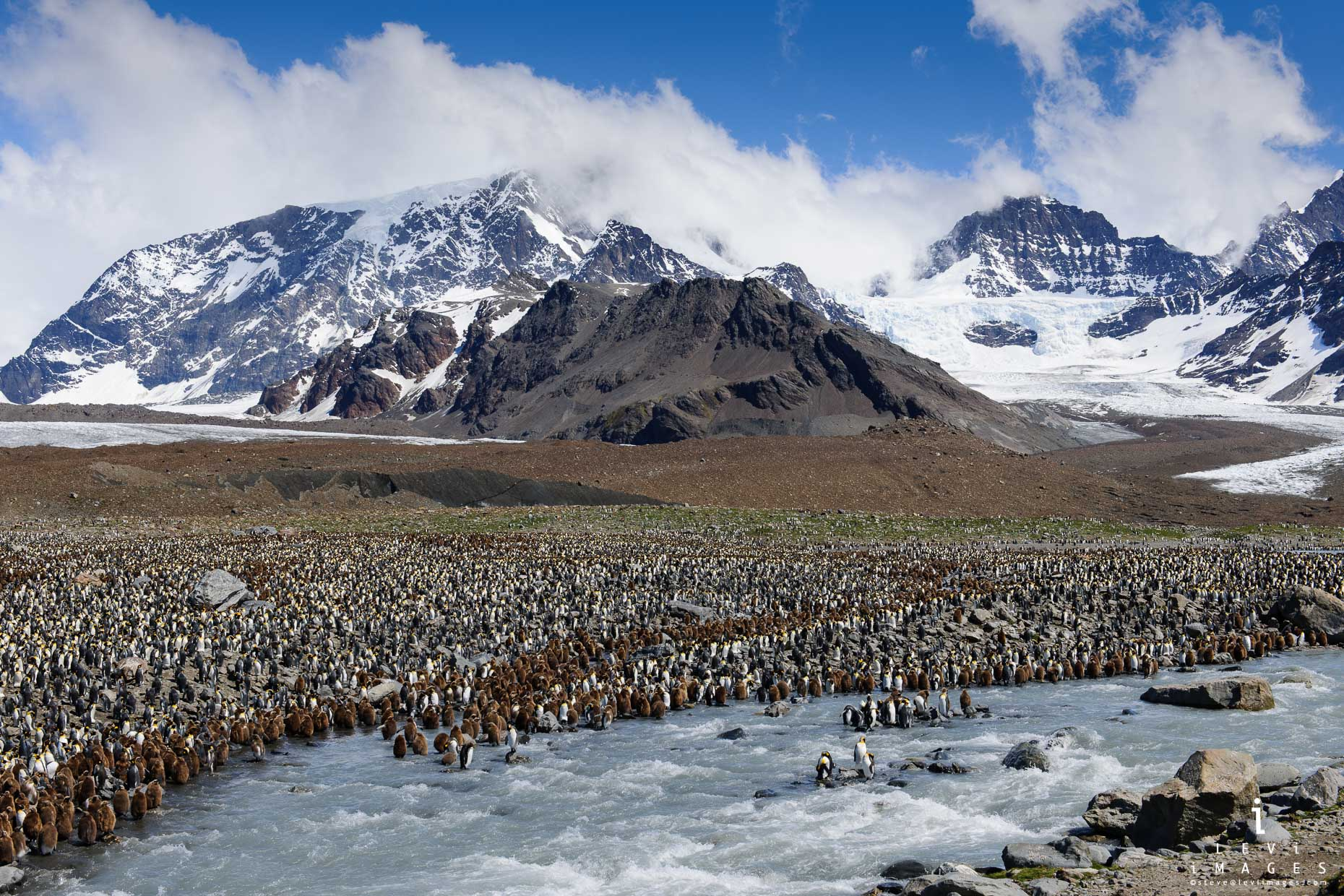 Overview of king penguin (Aptenodytes patagonicus) colony with mountains behind. Saint Andrews Bay, South Georgia Island
