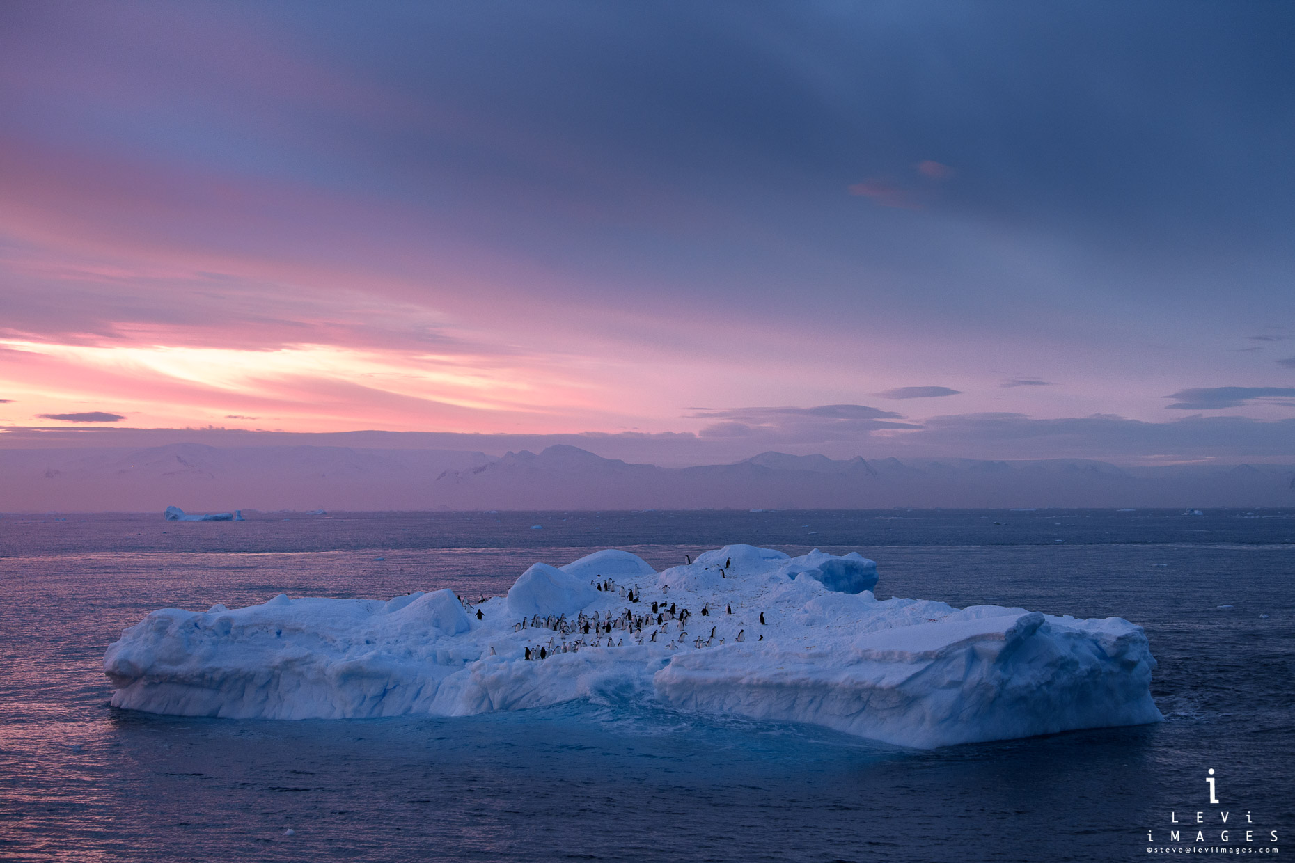 chinstrap Penguins on iceberg in pre-dawn light. Antarctic Sound, Antarctica