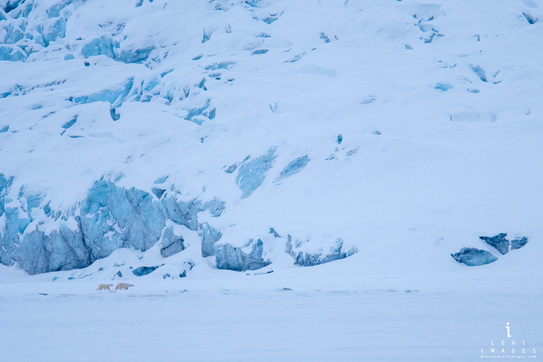 Polar bear and cub walking in front of snow covered glacier. Svalbard, Norway