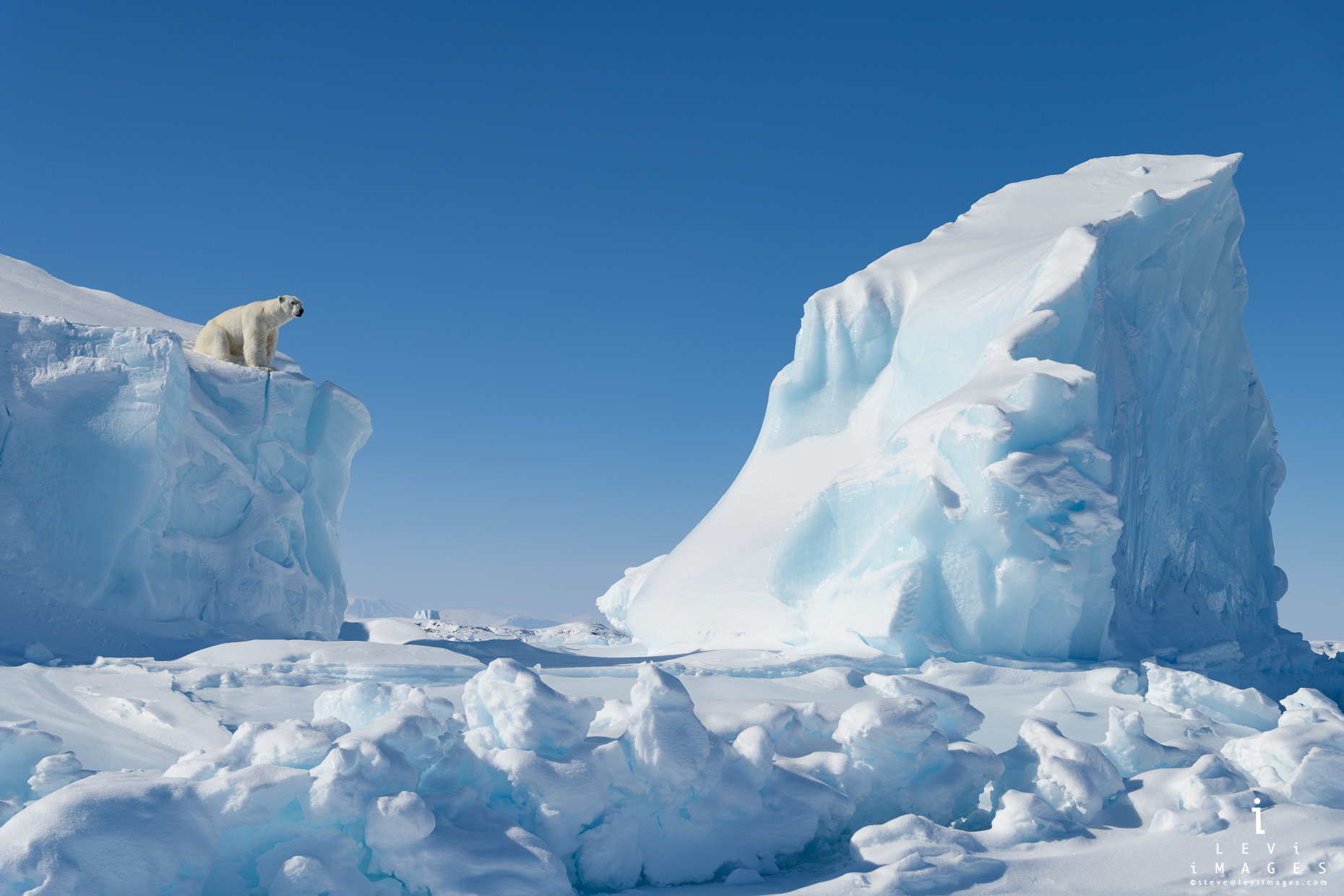 Polar bear (Ursus maritimus) looks out from iceberg in surreal winter environment. Baffin Island, Nunavut,Canada