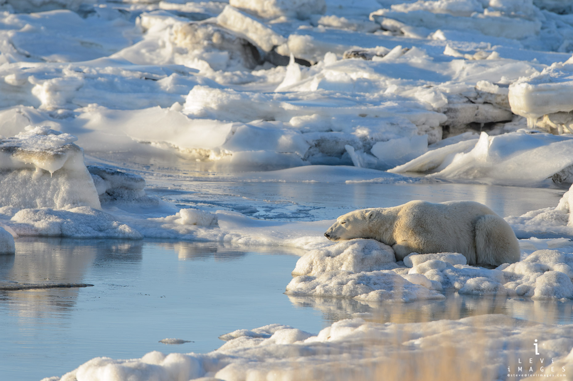 Polar bear (Ursus maritimus) rests on ice at sea edge. Hudson Bay, Manitoba, Canada