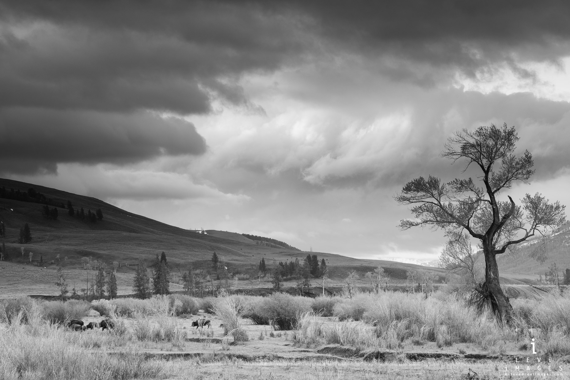 A Dramatic Yellowstone landscape is captured in black and white. Yellowstone National Park, Wyoming